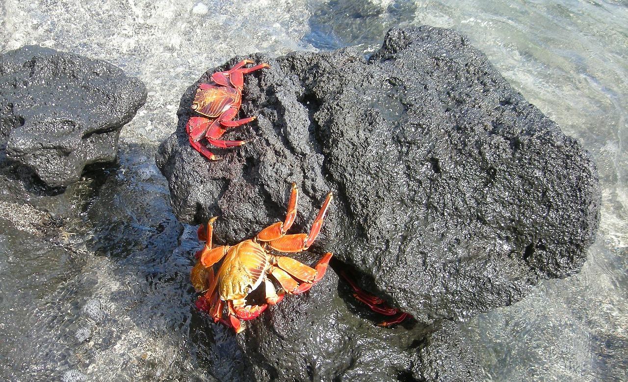 crabs-18011_1280